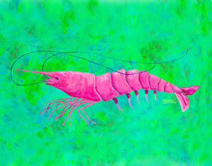 Pink Shrimp Painting