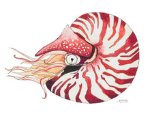 Load image into Gallery viewer, Sea Shell Art Nautilus Watercolor Print by Alexandra Nicole