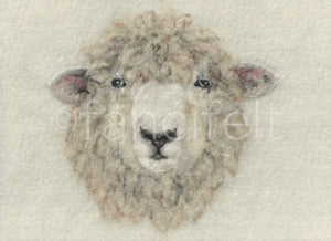 Romney Sheep Print