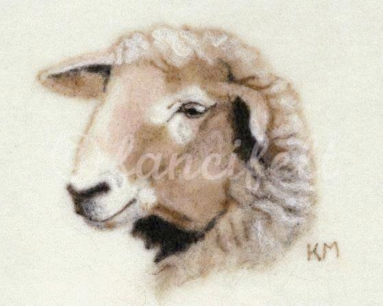 American Tunis Sheep Signed Print