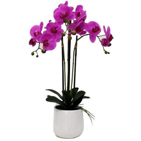 REAL TOUCH ORCHID 3 SPRAY PINK WITH WHITE POT - Luxe Living