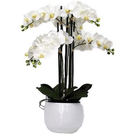 REAL TOUCH ORCHID 6 SPRAY WHITE WITH WHITE POT - Luxe Living