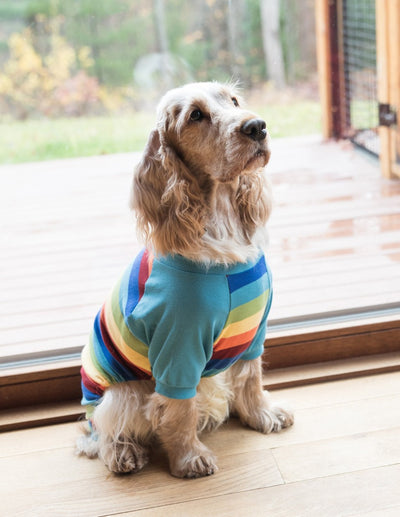 Dog Cotton Rainbow Stripes Pajamas