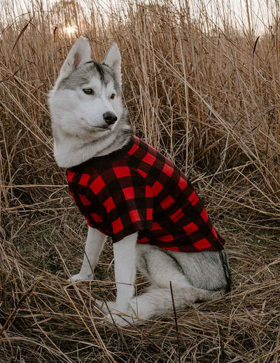 Big Dog Red & Black Plaid Pajamas