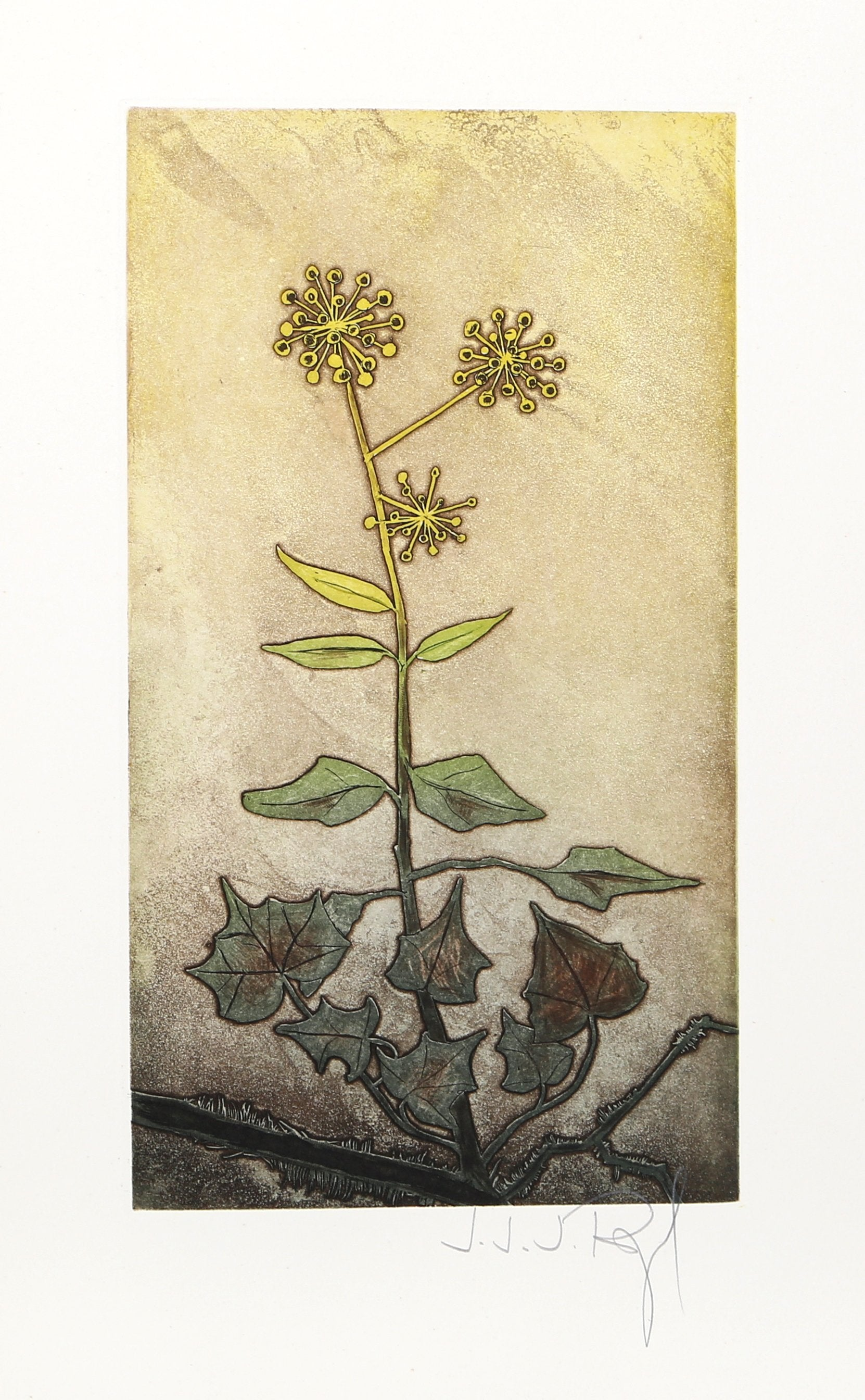 J.J.J. Rigal, Lierre Admirable from the Herbier Portfolio Etching - RoGallery