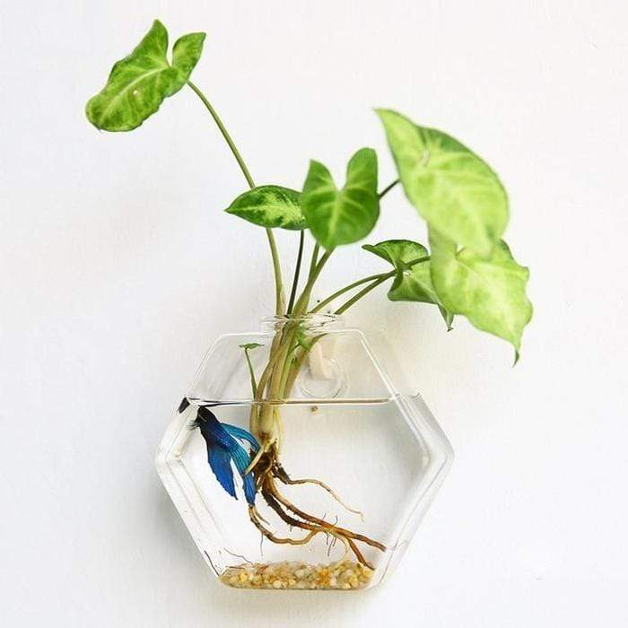 Hydroponic Glass Pot