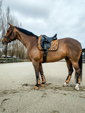 rebel equestrian collection wild things dressage set