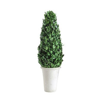 Preserved Boxwood Cone Topiary in White Clay Pot