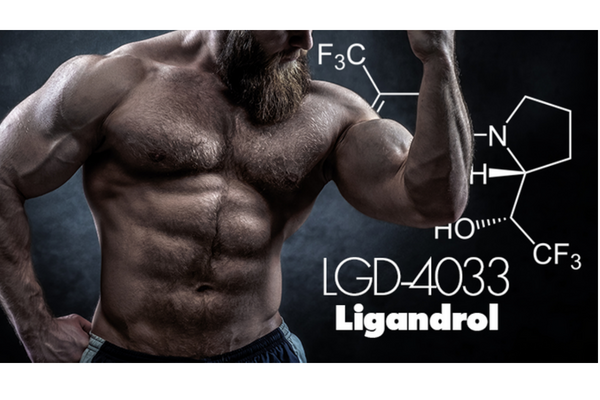 Why Is LGD-4033 So Popular?