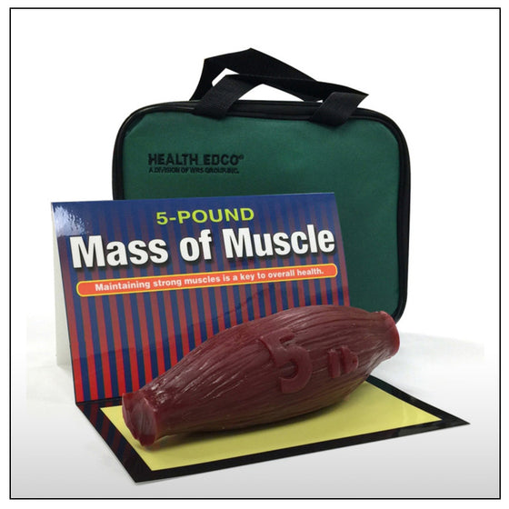 5 Pounds of Muscle Replica