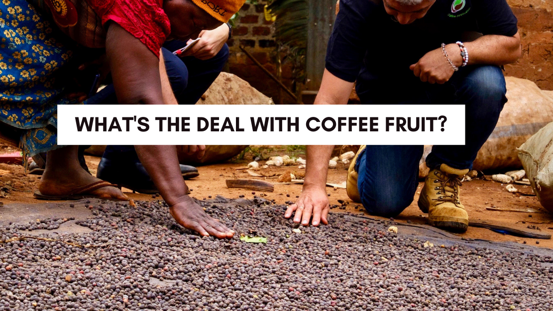 what's the deal with coffee fruit?