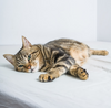 Is My Cat Sick? A how-to guide on how to give your cat an at home exam
