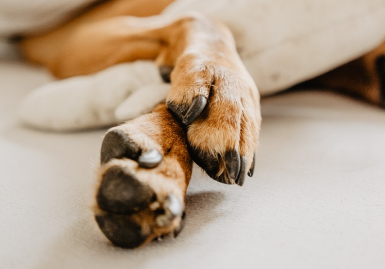 Taking Care of Your Dog's Paws