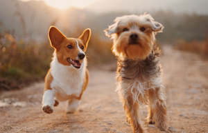 6 Tips For Improving Your Dog's Physical Fitness