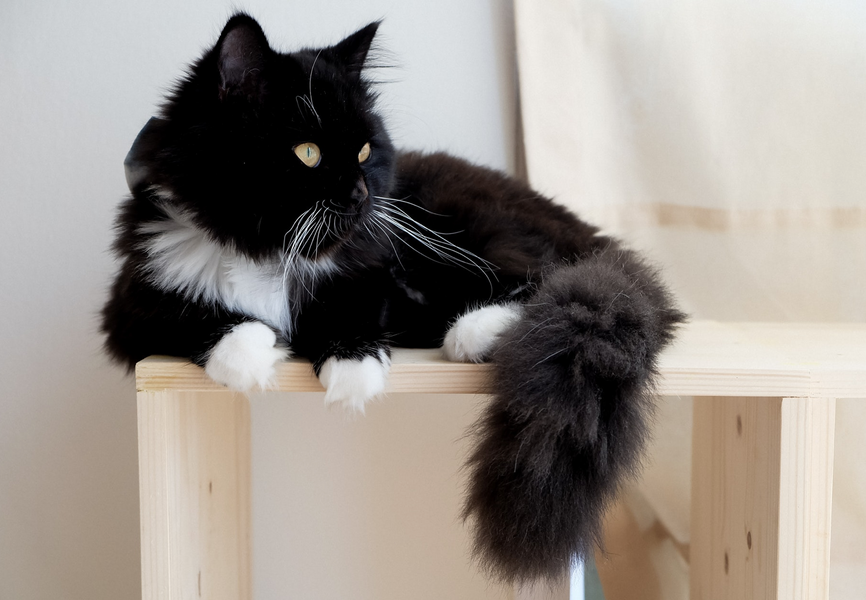 8 Simple Ways for Cat Owners to Keep A Clean House