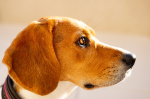 10 Important Tips for Taking Care of Your Dog