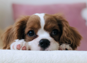 How To Potty Train Your Pup: Quick & Easy Tips