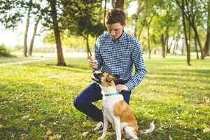 How To Protect Your Pets From Lyme Disease