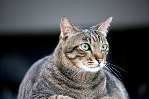 5 Easy Ways To Help Your Cat Lose Weight