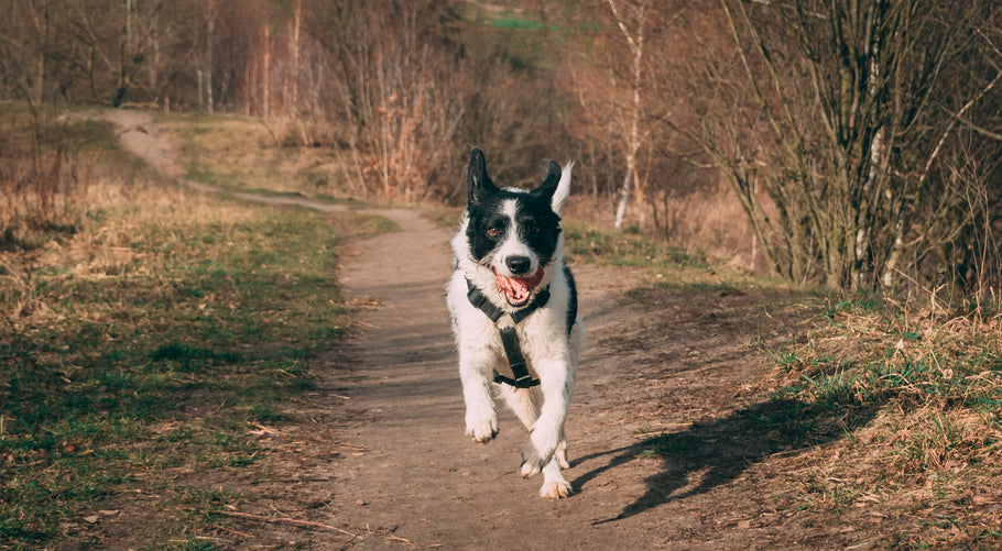 Why Exercise For Your Dog Is Important: 5 Simple Tips