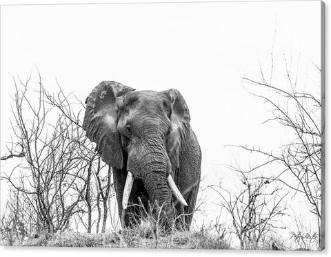 Black And White Elephant Print - Canvas Print