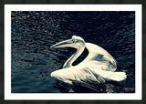 Great White Pelican - Black Framed Print