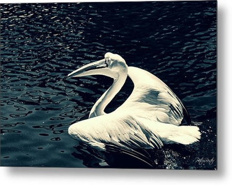 Great White Pelican - Metal Print