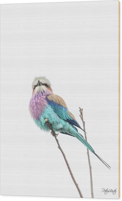Lilac-breasted Roller - Wood Print