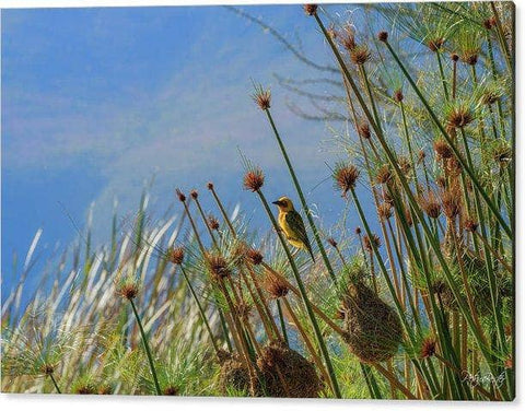 Reeds And Nests - Perspex Print