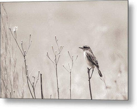 Stone Chat and Grass - Metal Print