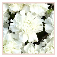 Load image into Gallery viewer, Carnations