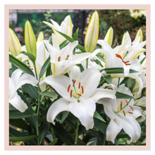 Load image into Gallery viewer, White Liliums or lilies home decor bouquets by Rose Bazaar