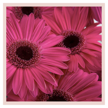 Load image into Gallery viewer, Gerbera flower bouquet home decor farm fresh rose bazaar karuturi
