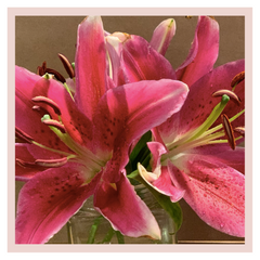 Rose Bazaar, Lilies, liliums, home decor, home delivery, beautiful, bunches, gifting, subscription,
