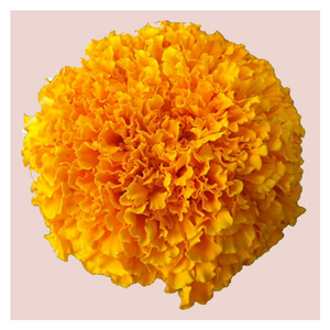 Marigold Loose Flowers 100 grams - One time