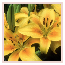 Load image into Gallery viewer, Yellow Liliums or lilies home decor bouquets by Rose Bazaar