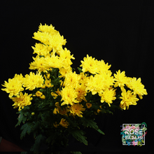 Load image into Gallery viewer, chrysanthemums home bouquet flowers rose bazaar karuturi