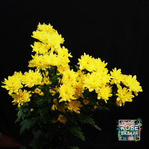 chrysanthemums home bouquet flowers rose bazaar karuturi