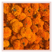 Load image into Gallery viewer, Marigold Loose Flowers 100 grams - One time