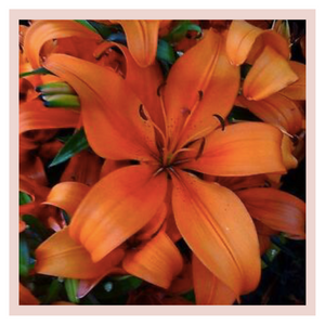 Orange Liliums or lilies home decor bouquets by Rose Bazaar