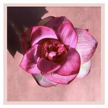 Load image into Gallery viewer, Lotus (2 stems) - One Time
