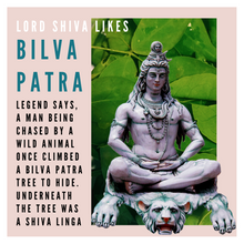Load image into Gallery viewer, Bilpatre bilva patre leaves for shiva puja or pooja by rose bazaar