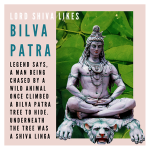 Bilpatre bilva patre leaves for shiva puja or pooja by rose bazaar