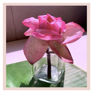 Lotus Box (2 stems)