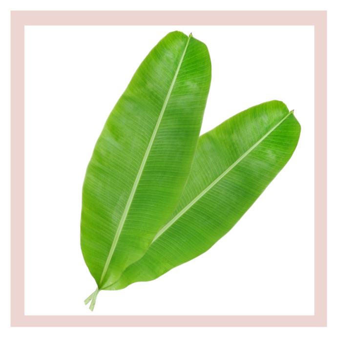Banana Leaves (set of 2) - One Time