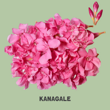 Load image into Gallery viewer, Oleander (Kanagale or Arali) 100 grams - One time