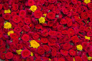 Roses Puja or Pooja flowers garland from Rose Bazaar