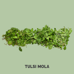 Tulsi Mola 40 cm- One Time