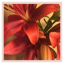 Load image into Gallery viewer, Lilium Box