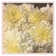Load image into Gallery viewer, White Sevanthi Chrysanthemum puja or pooja rose bazaar farm fresh flowers